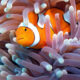 Рыба в океанах быстро «подсаживается» на поедание пластика — ученые
