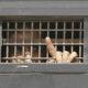 Израильский законодатель обсудит доклад анонимного заключенного