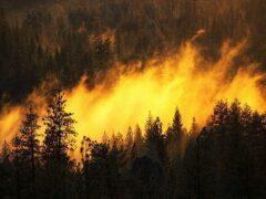 19 пожарных погибли в аризонском пожаре