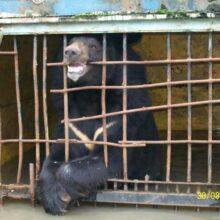 В Приморье в результате наводнения тонут животные в зоопарке