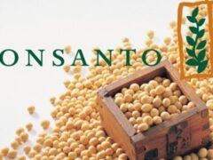 Франция запретила выращивать ГМ-кукурузу Monsanto