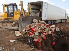 В России продолжается уничтожение санкционных продуктов