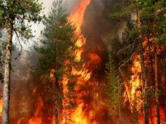 Ученые выяснили, что стало причиной пожаров в Сибири