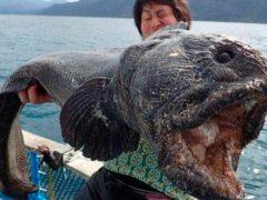 Японский рыбак выловил морского монстра