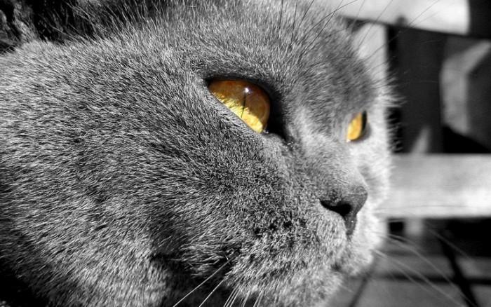 382971__black-cat_p