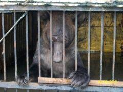 Животных из затопленного зоопарка в Уссурийске спасают волонтеры