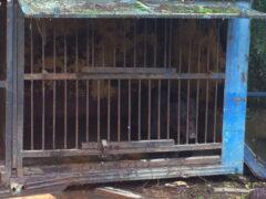 Животных из уссурийского зоопарка не вывезли — очевидцы