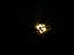 Жители большей части Земли наблюдали «Кровавую Луну» (ФОТО)