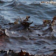 Крупный разлив нефти произошел у берегов Японии