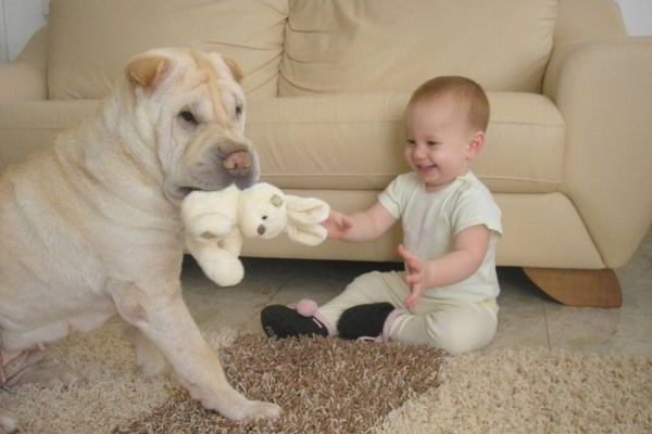 собака ребенок