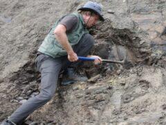 Новосибирские ученые назвали дату первой массовой гибели живых существ