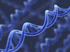 Ученые: Анализ ДНК не может дать точных данных о спортивных талантах