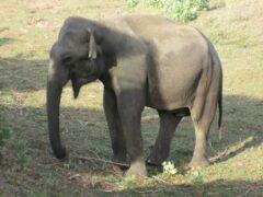 Ученые: Слон оказался самым «сочувствующим» животным
