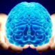 Человеческая лень зависит от структуры мозга