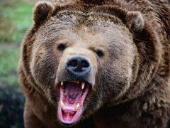В Приморье на детей напал медведь