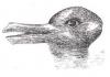 утка или кролик