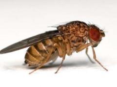 Ученые нашли новый способ борьбы с насекомыми