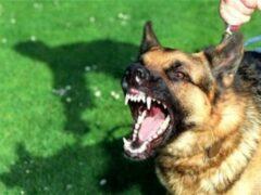 Собака вцепилась в лицо двухлетнего ребенка в Колпино