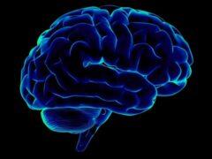 Ученые: установлена связь нейромедиаторов в мозге и поведением аутистов
