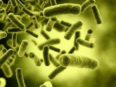 Израильские ученые подсчитали число бактерий и клеток в теле человека