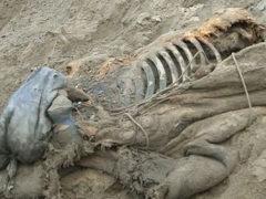 Археологи: люди жили в Арктике уже 45 тыс. лет назад