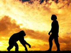 В Китае учеными найден новый вид человека