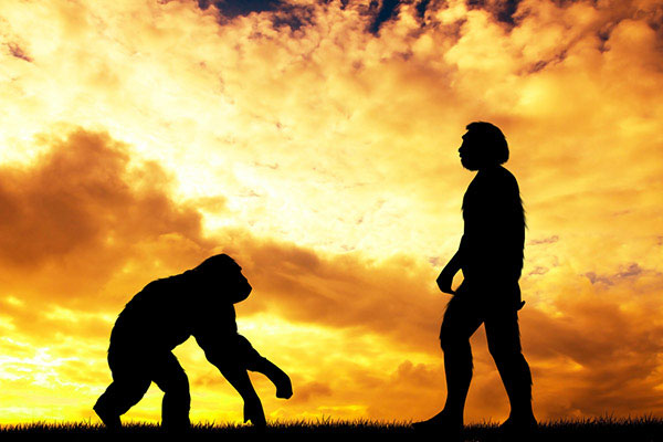 человек, обезьяна