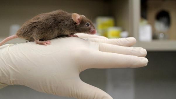 мышь исследование