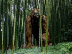 Более 100 000 лет назад вымерли настоящие «кинг-конги» — ученые