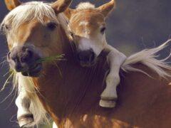 В Волгоградской области безработный мужчина украл лошадь и жеребенка