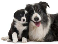 Британские ученые создали IQ-тест для собак
