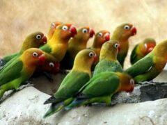 Россельхознадзор не пустил в Россию 12 попугаев с Украины