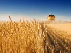 Елена Скрынник: доктрина продовольственной безопасности работает