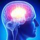 Британские ученые узнали, как работает система вознаграждения мозга человека