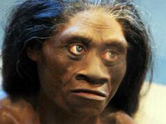 Ученые выяснили, когда вымерли индонезийские «хоббиты»