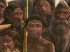 Расшифрована древнейшая ДНК человека