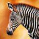 В норвежском зоопарке зебру скормили тиграм на глазах у посетителей