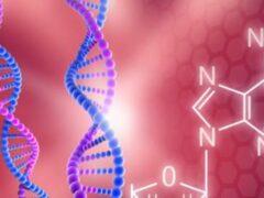 Ученые обнаружили «гены смерти», сокращающие жизнь на 4 года