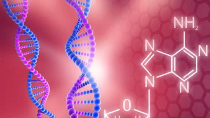 Ученые отыскали уменьшающие срок жизни гены