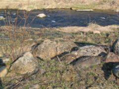 Под Петербургом в реке Стрелка нашли тело женщины с порубленной головой