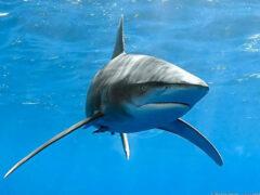 Ученые: акулы обладают признаками личности
