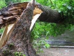 В Долгопрудном дерево упало на двух школьниц