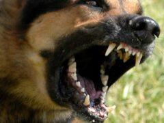 В Екатеринбурге собака напала на семилетнюю девочку
