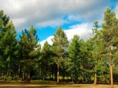 Учёные: От глобального потепления мир спасут Сибирь и Канада