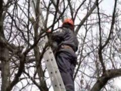 В Красноярске спасатели сняли с дерева упавшего с обрыва мужчину
