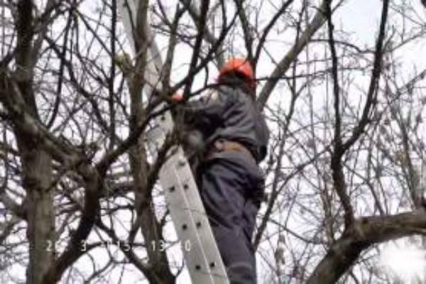 спасатель дерево