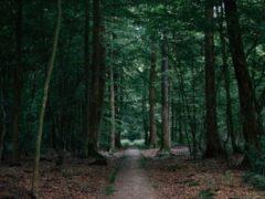 В Кузбассе нашли заблудившегося в лесу пенсионера