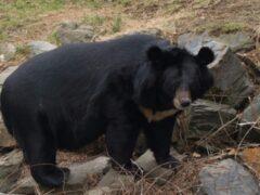 В США огромный медведь напал на туристов