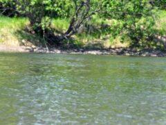 В Волгоградской области утонула в пруду 12-летняя девочка
