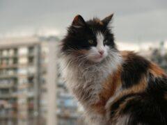 Живодёр из Кемерова выбросил из окна седьмого этажа семь животных